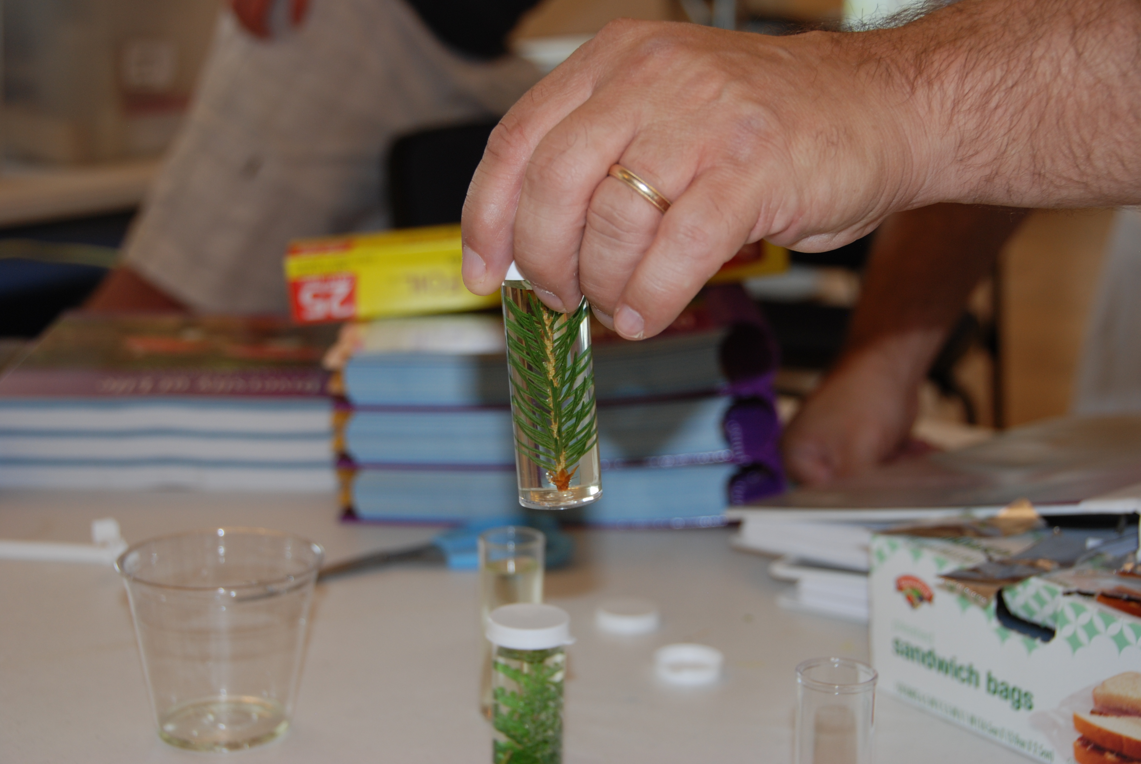 Life Science experiment about respiration